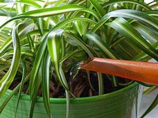 como regar plantas em vasos - Blog Plantas em Casa