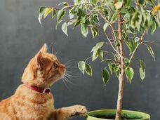 25 plantas toxicas para cães e gatos